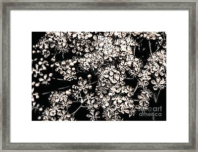 Summer Song  Framed Print