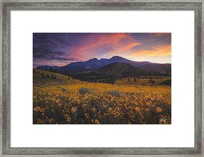 Summer Splendor Framed Print by Peter Coskun