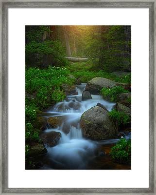 Summer Stream Framed Print by Darren  White