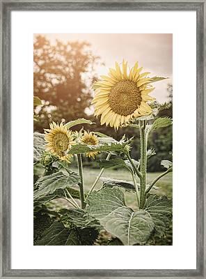 Summer Sun Framed Print by Heather Applegate