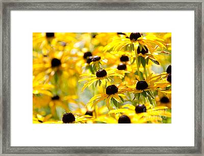 Summer Sun Framed Print by Jennifer Booher