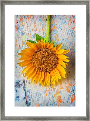 Summer Sunflower Framed Print by Garry Gay