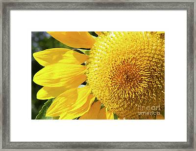 Framed Print featuring the photograph Summer Sunflower Painterly by Andee Design
