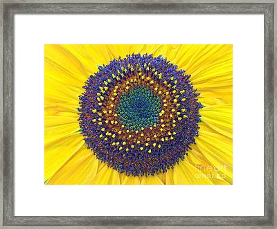 Summer Sunflower Framed Print by Todd Breitling