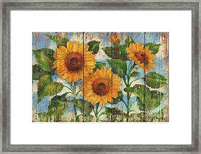 Summer Sunflowers Distressed Framed Print by Paul Brent