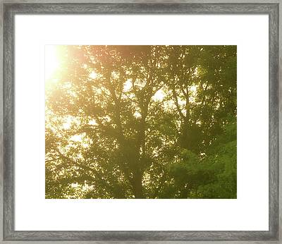 Summer Sunrise Through The Trees Framed Print by Dan Sproul