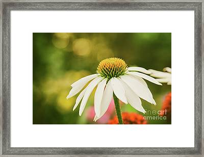 Summer Sunshine Framed Print