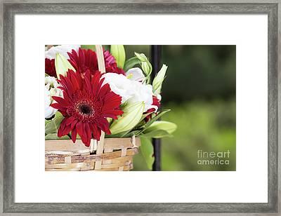 Summer Surprise Framed Print