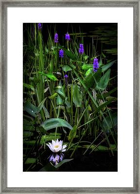 Framed Print featuring the photograph Summer Swamp 2017 by Bill Wakeley