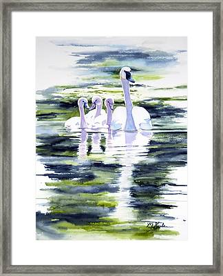 Summer Swans Framed Print