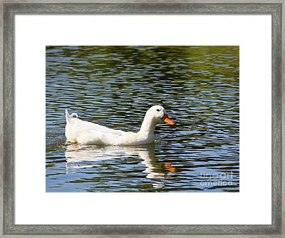 Summer Swim Framed Print