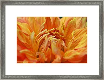 Framed Print featuring the photograph Summer Tales by Michiale Schneider