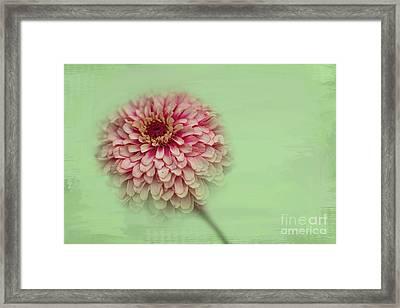 Summer Tenderness Framed Print