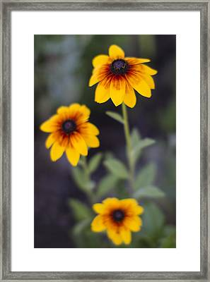 Summer Threesom Framed Print by Rebecca Cozart