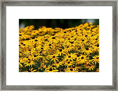 Summer Time Is Here Framed Print