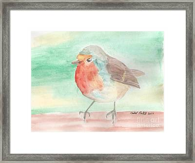 Summer Time Robin Framed Print by Isabel Proffit