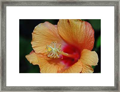 Summer Tones Framed Print by Jean Booth