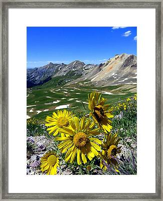 Framed Print featuring the photograph Summer Tundra by Karen Shackles