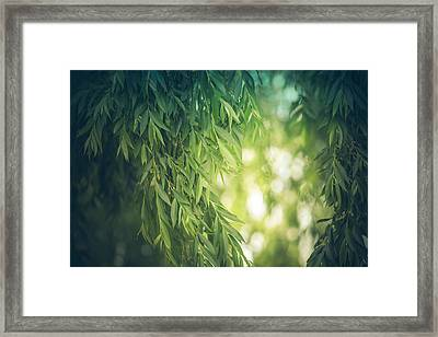 Beyond The Willow Leaves Framed Print by Debi Bishop