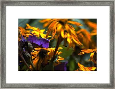 Summer Wanes Framed Print