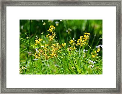 Summer Weeds Framed Print