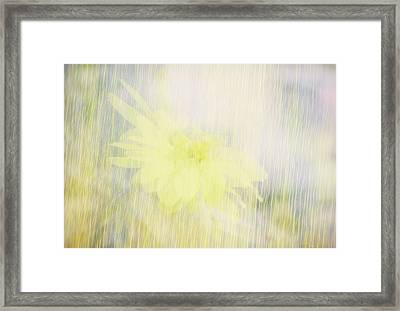 Framed Print featuring the photograph Summer Whisper by Ann Powell