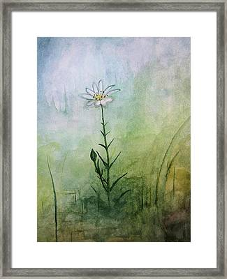 Summer Wildflower Framed Print