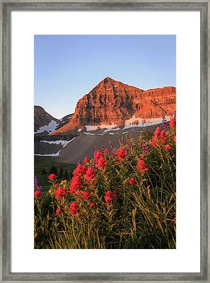 Framed Print featuring the photograph Summer Wildflowers On Timpanogos. by Johnny Adolphson