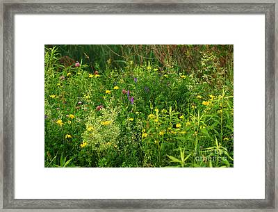 Framed Print featuring the photograph Summer Wildflowers by Smilin Eyes  Treasures