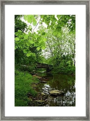 Summer Woodland And The Patapsco River Maryland Framed Print