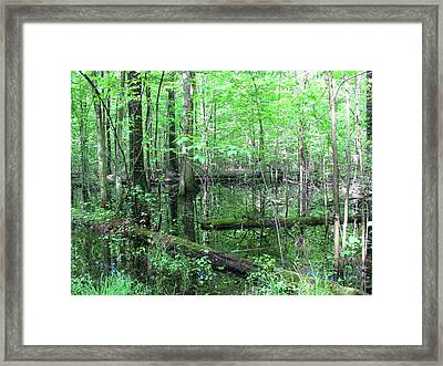Summer Woods Framed Print by Trisha Dahm