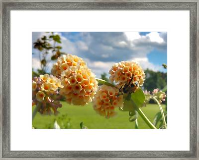 Framed Print featuring the photograph Summer Work by Isabella F Abbie Shores FRSA