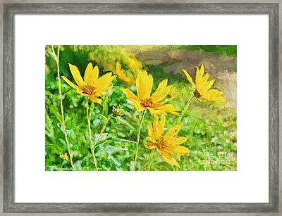 Summer Yellow Wldflowers IIi Framed Print by Debbie Portwood