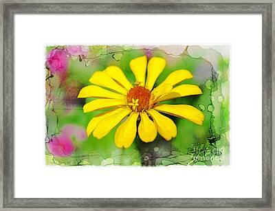 Summer Zinnia  Framed Print by Debbie Portwood
