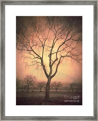 Summerland Light In Winter Framed Print
