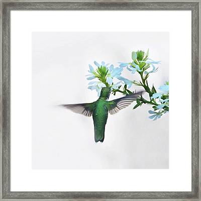 Framed Print featuring the photograph Summer's Bounty by Sue Collura
