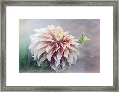Summer's Dahlia Framed Print by Julie Palencia