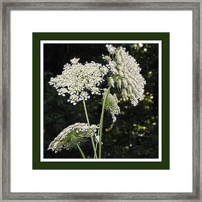 Summer's Delight Framed Print by Ginger Howland