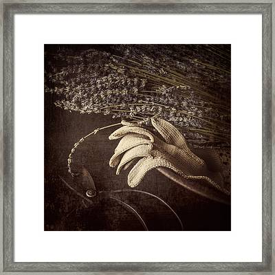 Summer's Grace Framed Print by Amy Weiss