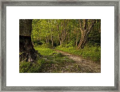 Price Lake Trail - Blue Ridge Parkway Framed Print