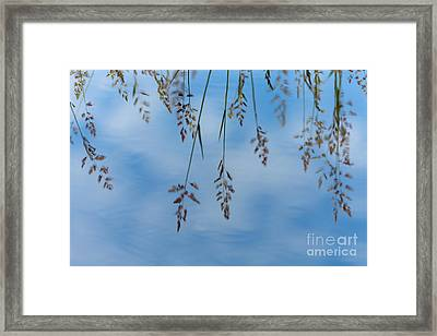 Summers Reflection Framed Print
