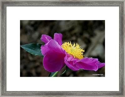 Framed Print featuring the photograph Summer's Splendor by Lois Lepisto