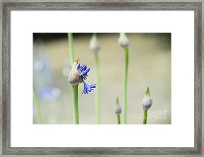 Summertime Blues   Framed Print by Tim Gainey