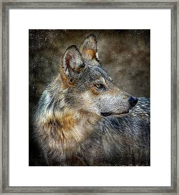 Summertime Coated Wolf Framed Print