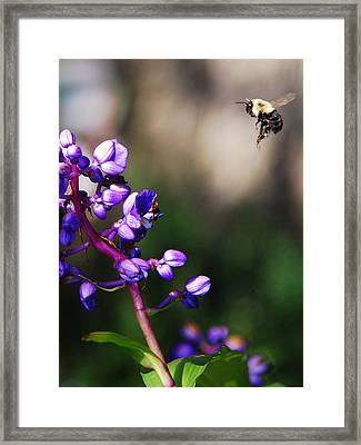 Summertime Framed Print by Margaret Palmer