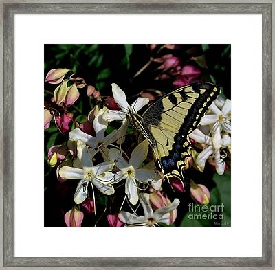 Framed Print featuring the photograph Summertime by Marija Djedovic