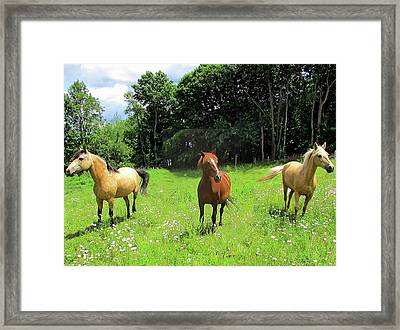 Summertime Moment With The Paso Fino Mares Framed Print