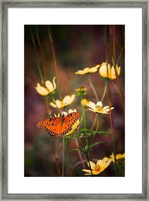 Summertime Monarch Framed Print by Parker Cunningham