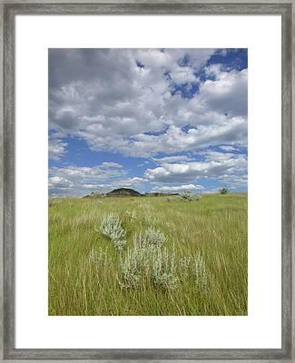Summertime On The Prairie Framed Print