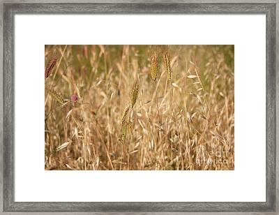 Summertime Whisper Framed Print by Julia Hiebaum